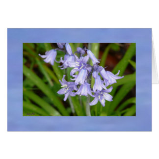 Bluebells of Spring Greeting Card