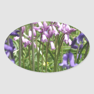 Bluebells Picture Oval Sticker