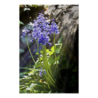 Bluebells with sunlight next to a log poster