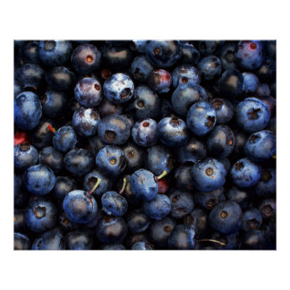 Blueberries Canvas Poster