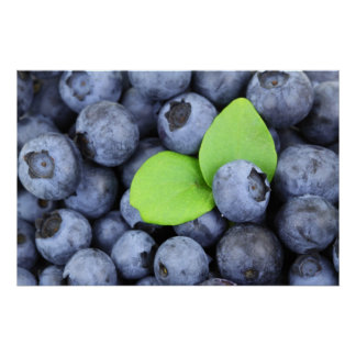 Blueberries Print