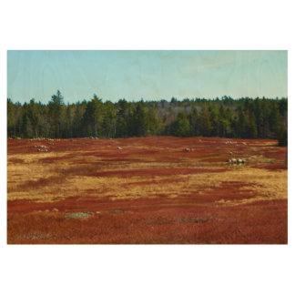 Blueberry Barrens Gouldsboro, Maine Wood Poster