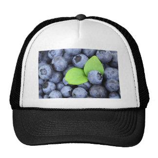 BLUEBERRY TRUCKER HAT