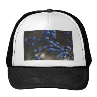 Blueberry Cap