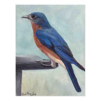 Bluebird Bird Art Postcard