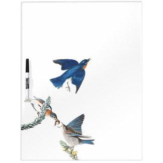 Bluebird Birds Wildlife Animal Dry Erase Board