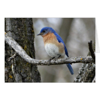 Bluebird, Birthday Card