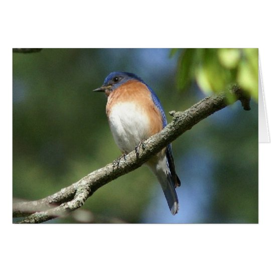 Bluebird, Greeting Card. Card