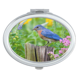 Bluebird male on fence post in flower garden makeup mirror