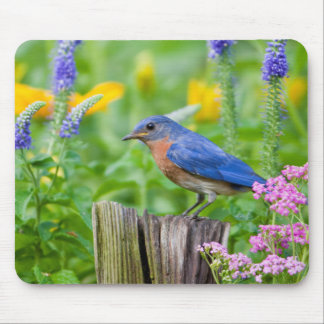 Bluebird male on fence post in flower garden mouse mat