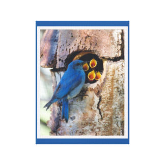 Bluebird Mother & Young Canvas Print
