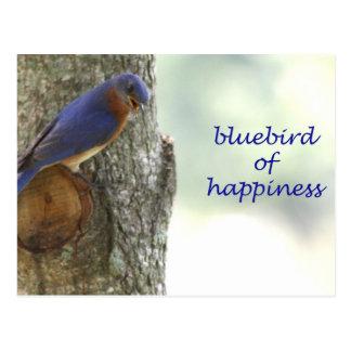 Bluebird of Happiness Postcard