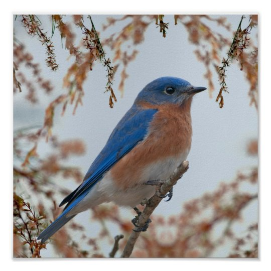 Bluebird of Happiness Poster