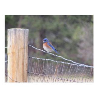 Bluebird on a Fence Postcard