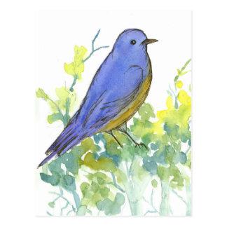 Bluebird on Sagebrush Watercolor Postcard