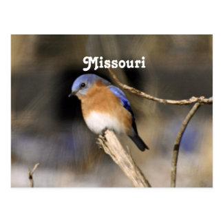 Bluebird Post Cards