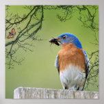 Bluebird Provider Poster
