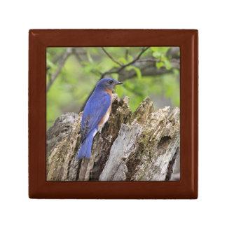 Bluebird Small Square Gift Box