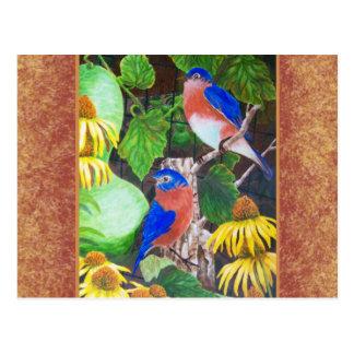 Bluebird with border post card
