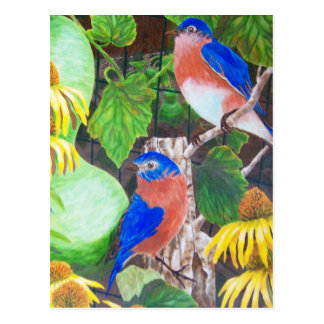 Bluebirds Postcard