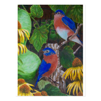 Bluebirds Postcard