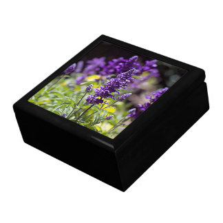 Bluebonnet Gift box