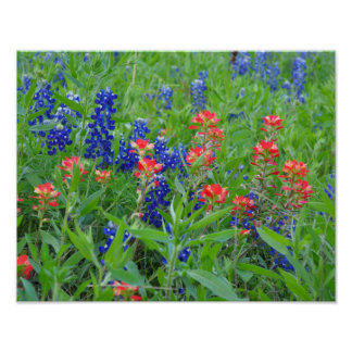 Bluebonnets and Indian Paintbrush poster