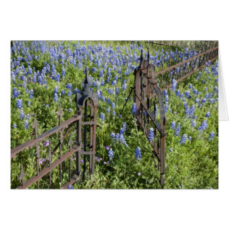 Bluebonnets and phlox surrounding cemetery gate card