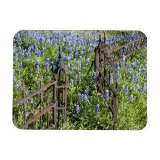 Bluebonnets and phlox surrounding cemetery gate rectangular photo magnet