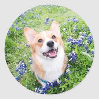 Bluebonnets Classic Round Sticker