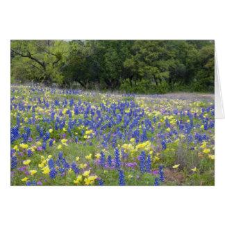 Bluebonnets, primrose, and phlox card