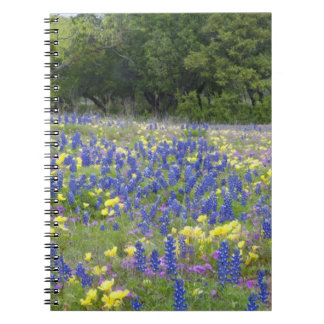Bluebonnets, primrose, and phlox note books