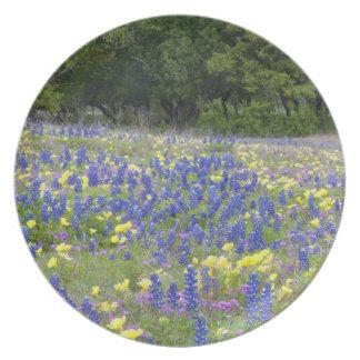 Bluebonnets, primrose, and phlox plate