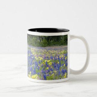 Bluebonnets, primrose, and phlox Two-Tone coffee mug