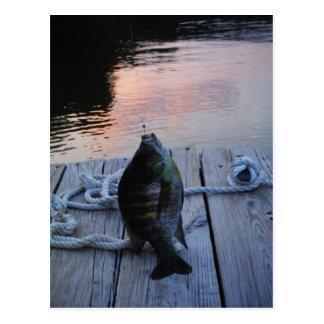 Bluegill at sunset Lake Arrowhead Postcard