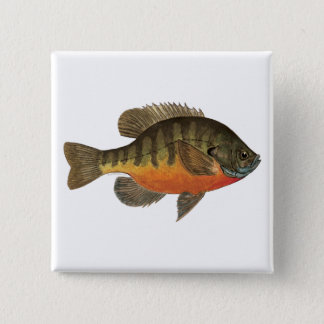 Bluegill Bream 15 Cm Square Badge