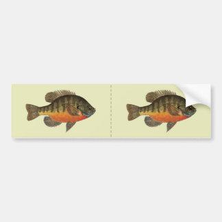Bluegill Bream Bumper Sticker