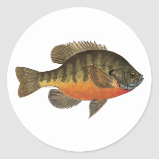 Bluegill Bream Classic Round Sticker