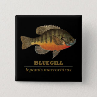 Bluegill Bream Fishing 15 Cm Square Badge