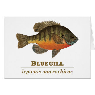 Bluegill Bream Fishing Greeting Card