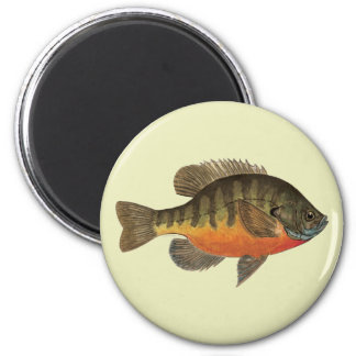 Bluegill Bream Magnet