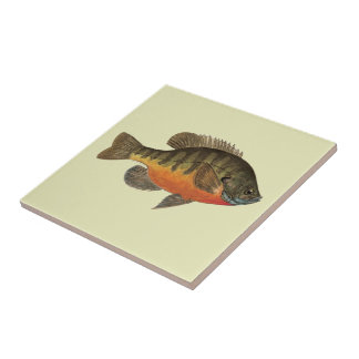 Bluegill Bream Small Square Tile