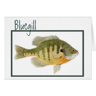 Bluegill card