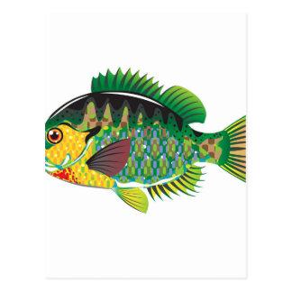 Bluegill Panfish Vector Postcard