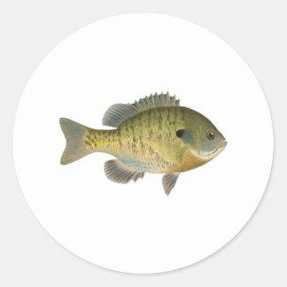 Bluegill Sunfish - Bream Round Sticker
