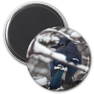 Bluejay 1624 fridge magnets