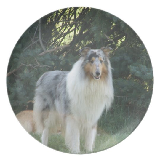 Bluemerle collie plate