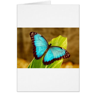 blueMorphoZ.jpg Greeting Card