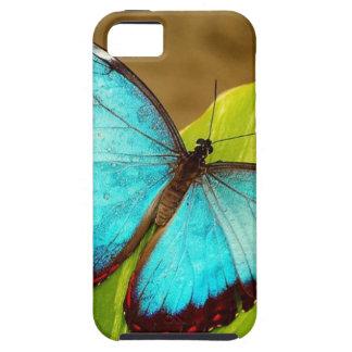 blueMorphoZ.jpg iPhone 5 Cover