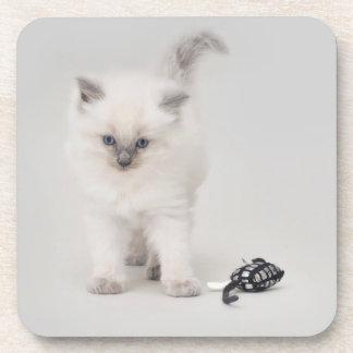 Bluepoint Ragdoll Kitten Coaster